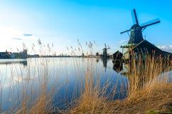 Золотая трава ветрянками Zaanse Schans стоковые изображения rf