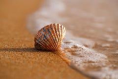 Золотая тропическая раковина на пляже моря с волнами под солнцем восхода солнца Стоковые Изображения RF