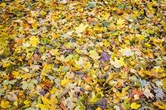 Золотистая осень Листья под ногами Стоковые Фотографии RF
