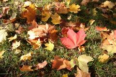 Золотистая осень Стоковое Изображение RF