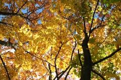 Золотистая осень Стоковые Изображения