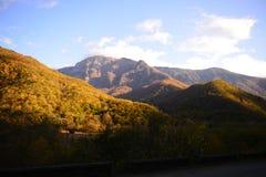 Золотистая осень Стоковая Фотография RF