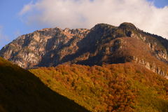 Золотистая осень Стоковое Фото