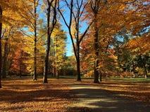 Золотистая осень Стоковые Фотографии RF