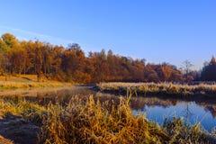 Золотистая осень Стоковое Изображение