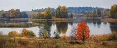 Золотистая осень стоковая фотография