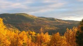 Золотистая долина Стоковые Изображения
