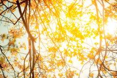 Золотистое дерево Стоковая Фотография