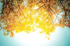 Золотистое дерево Стоковые Фотографии RF