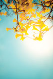 Золотистое дерево Стоковое Изображение RF