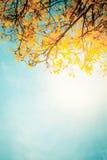 Золотистое дерево Стоковая Фотография RF