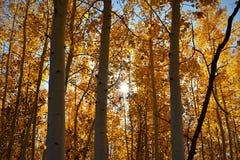 золотистые листья Стоковые Изображения RF