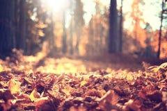 Золотистый ландшафт осени Стоковое Изображение RF