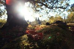 Золотистый ландшафт осени Стоковая Фотография RF
