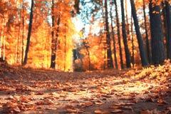 Золотистый ландшафт осени Стоковые Фото