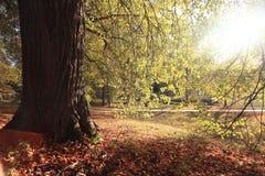 Золотистый ландшафт осени Стоковые Фотографии RF