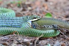 золотистый вал змейки Стоковое Изображение
