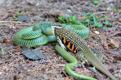 золотистый вал змейки Стоковое Изображение RF