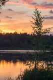 золотистый заход солнца Стоковое Фото
