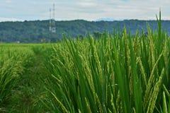 золотистый зеленый цвет Стоковые Фото