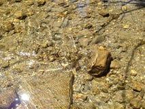 золотистый поток Стоковое Изображение RF
