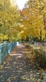 золотистый путь Стоковое Фото