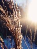 золотистый свет Стоковые Изображения RF