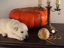 золотистый спать retriever щенка Стоковые Фотографии RF