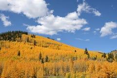 золотистый холм стоковая фотография rf