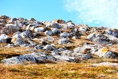 золотистый холм стоковое фото