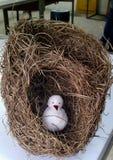 Золотое гнездо птицы ткача Стоковое фото RF
