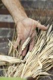 Золотое зерно в руке Стоковые Изображения