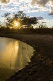 Золотое озеро грязи на заходе солнца Стоковая Фотография RF