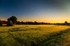 Золотое поле Стоковое фото RF