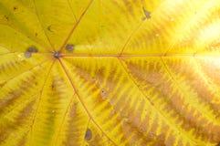Золотое разрешение на тени Стоковые Изображения RF