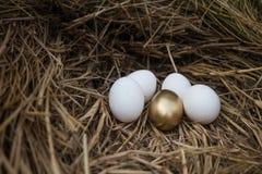 Золотое яичко между белыми яичками Стоковая Фотография