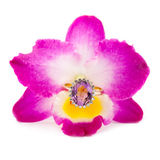 Золотое amethyst кольцо на орхидее цветка Стоковое Изображение