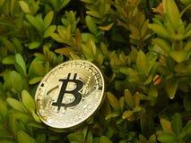 Золотое Bitcoin и природа Стоковые Изображения
