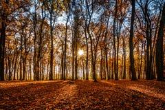 Золотое Forrest стоковое изображение