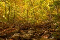 Золотое Forrest Стоковая Фотография