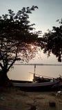 Золотой взгляд деревьев в Солнце Стоковое Изображение RF