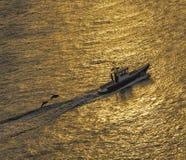 Золотой заход солнца и дельфины стоковое изображение