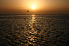 Золотой заход солнца над морем и летящей птицей, Красным Морем Стоковые Фото