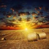 Золотой заход солнца над полем с ячменем стоковое фото rf