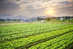 Золотой заход солнца над полем фермы стоковые изображения