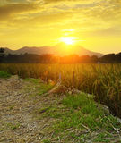 Золотой заход солнца над полем фермы Стоковое Фото