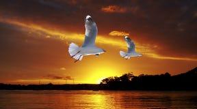 Золотой заход солнца океана чайки Искусство фото оригинала исключительное Стоковое Фото