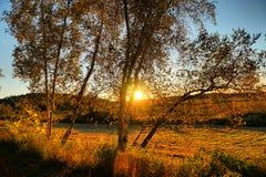 Золотой заход солнца осени в октябре Стоковая Фотография RF
