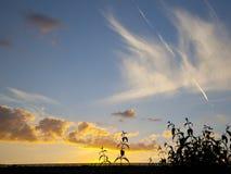 Золотой заход солнца с облаком цирруса и кумулюса Стоковые Фото
