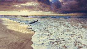 Золотой корень захода солнца и дерева на пляже Стоковые Изображения